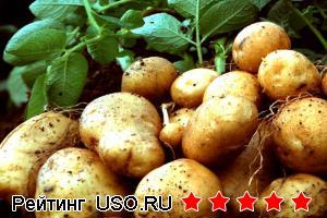 Как варить картофель