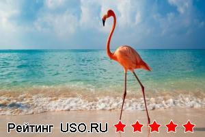Сколько лететь до Доминиканы из Москвы?