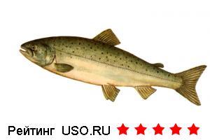 Драники с малосольным лососем
