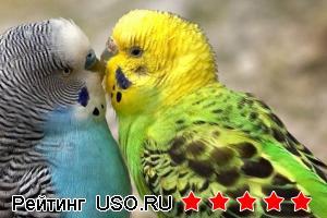 Сколько живут волнистые попугаи?