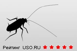 Как убить таракана