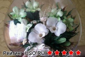 Долговечные живые цветы
