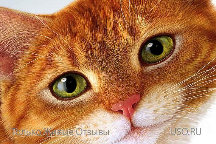 Половая зрелость кошки течка