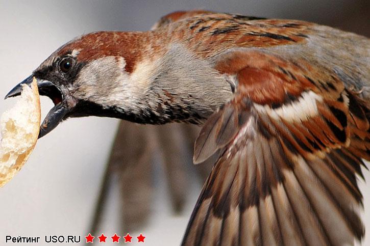 Кормушку для птиц своими руками