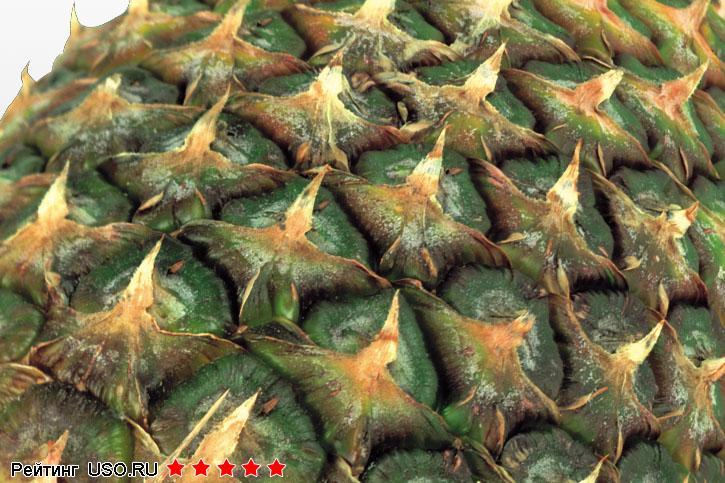 Как вырастить ананас дома из верхушки - 76